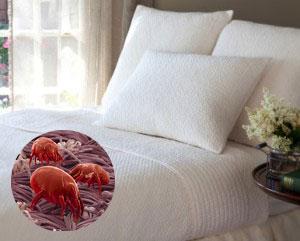 mattressdustmites