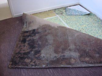 mould on carpet